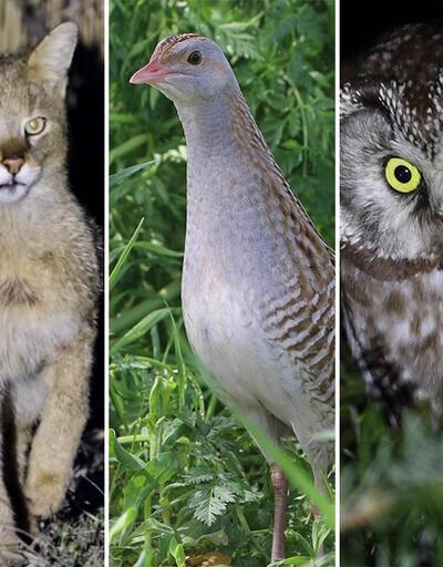 Türkiye'nin az rastlanan canlıları