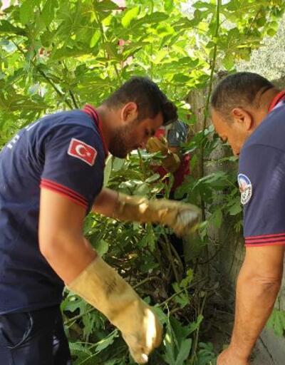 Bahçede mahsur kalan 50 kaplumbağayı itfaiye kurtardı