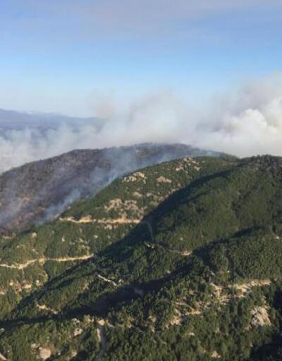 Son dakika... Aydın ve Muğla'da, 8 ayda 865 hektar alan yandı
