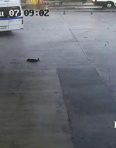 Vicdansızlık! Yavru köpeğe çarpıp kaçtı