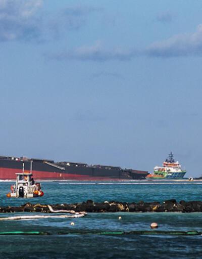 Petrol faciası ekosistemi de vurdu: 17 yunus ölü bulundu