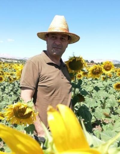 Gölbaşı'nda ayçiçeği hasadı yapıldı