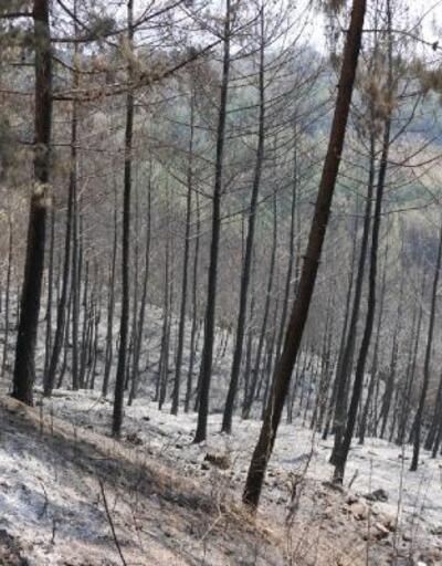 Son dakika haberleri.. Orman yangını sonrası Kozan'da yaralar sarılıyor
