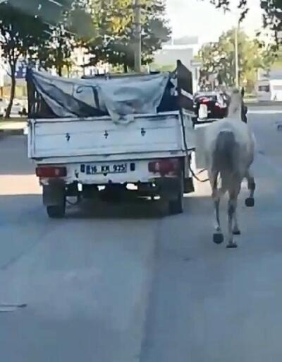 Son dakika.. Atı kamyonetin arkasına bağlayıp koşturdu