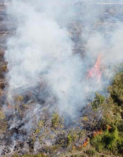Son dakika... Kızılırmak Deltası Kuş Cenneti'nde yangın