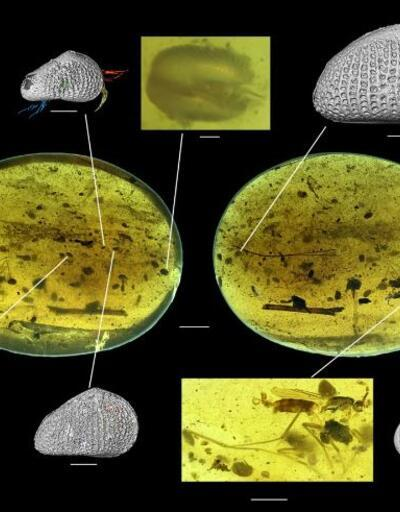 Dünyanın en eski hayvan spermi bulundu