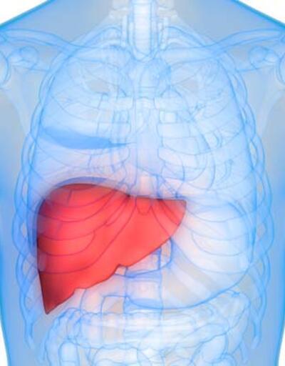 Karaciğer yağlanmasını önlüyor