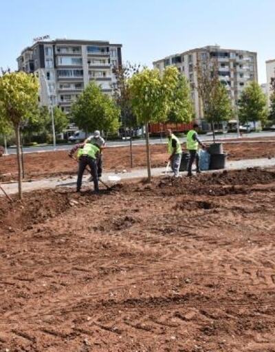 Diyarbakır'a özgü ağaçlar parkta yaşam bulacak