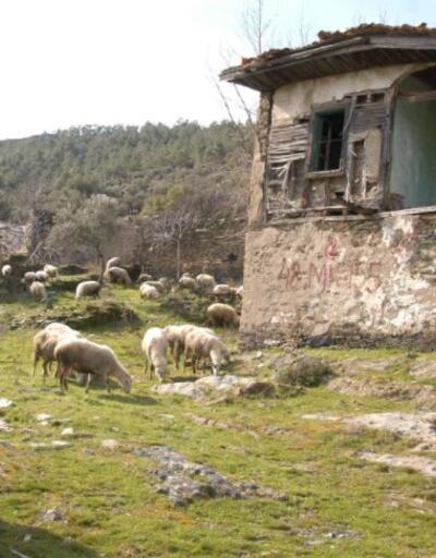 Son dakika.. İki asırlık köy koyunlara kaldı