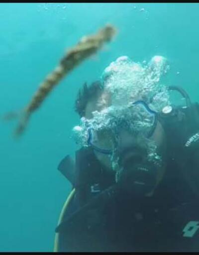 Van Gölü'nde yeni canlı türü kameraya yansıdı