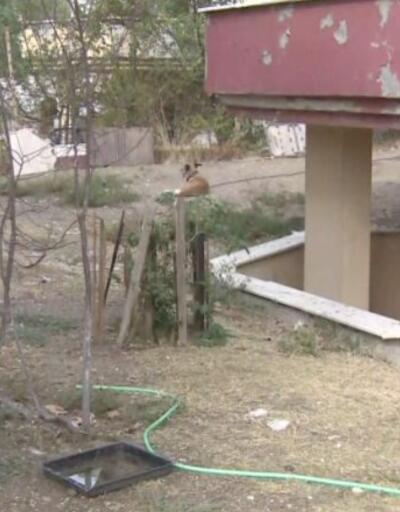 Köpeği boğazından bıçaklayan saldırgan serbest kaldı