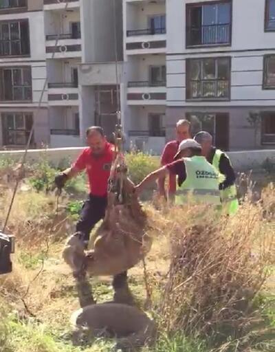 Kırşehir'de su kuyusuna düşen koyunu, itfaiye kurtardı