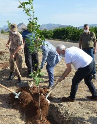Kozan'ın girişine 300 turunç ağacı dikildi