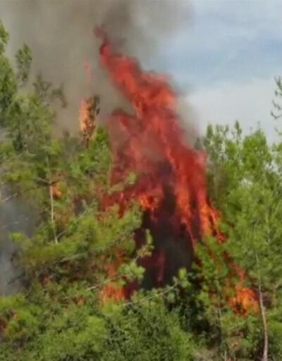 Osmaniye'de yangın paniği! Alevler evlere de ulaştı | Video
