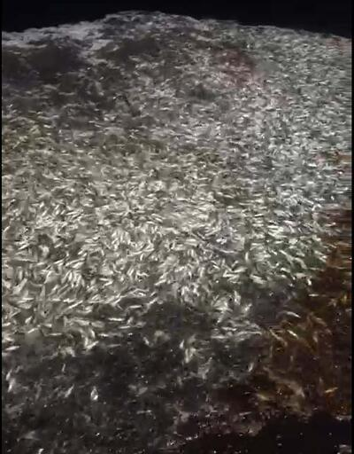 Balıkçılardan örnek davranış! 15 ton balığı geri bıraktılar
