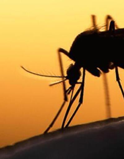 Son dakika: DSÖ yeni tehdidi duyurdu: Sivrisineklerden bulaşıyor