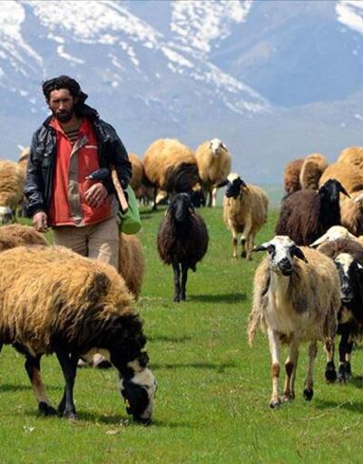 Hayvancılık yatırım destekleri belirlendi