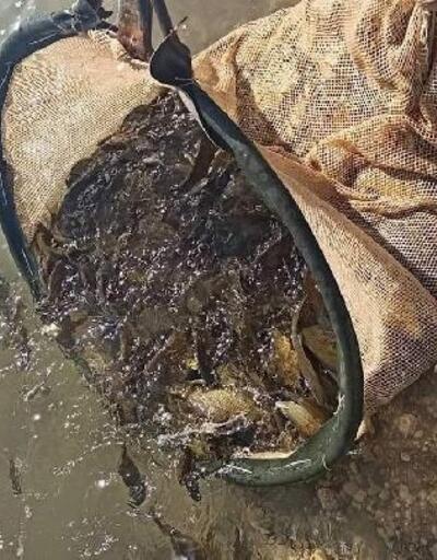 Gerger'de Atatürk Baraj Gölü'ne 300 bin balık yavrusu bırakıldı