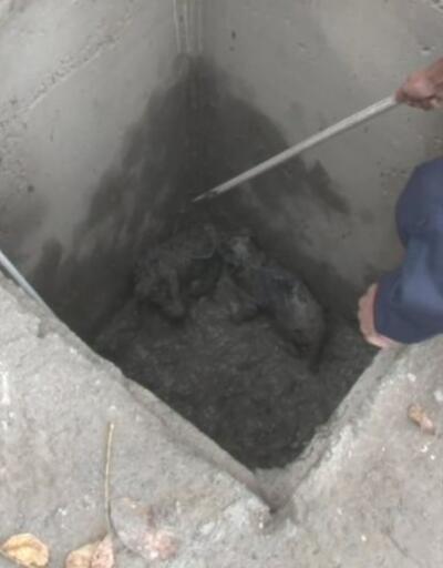 Dört yavru köpek su kuyusundan kurtarıldı | Video