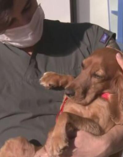 İnci'nin köpeği de kurtarıldı | Video