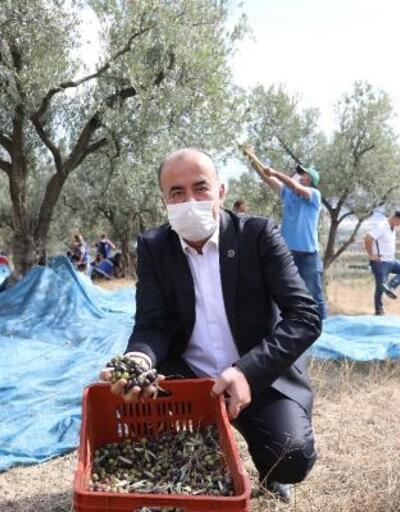 Mudanya Belediyesi'nden zeytin üreticisine 356 bin lira destek