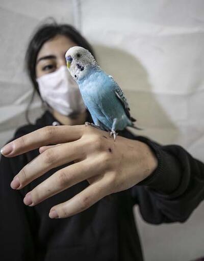 """Enkaz altında kalmaktan kuşu """"Şanslı"""" sayesinde kurtuldu"""