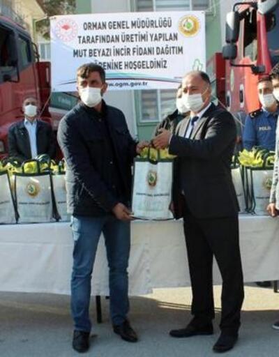 Mut'ta 382 aileye incir fidanı dağıtıldı