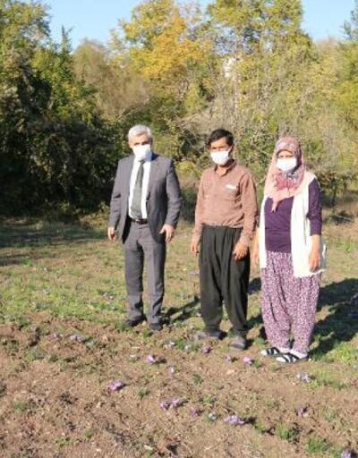 Safran yetiştiriciliği yapan kadın çiftçiye ziyaret