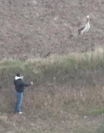 Malkara'da pelikan ilgi odağı oldu