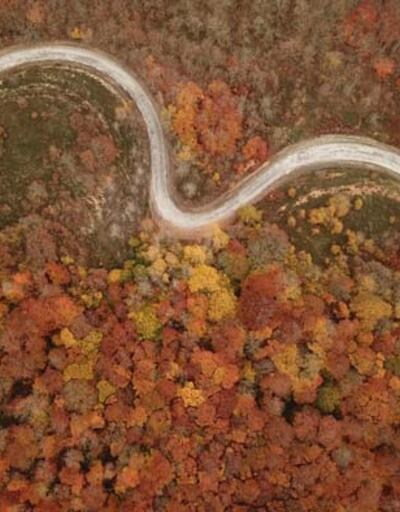 Istranca ormanlarında sonbaharın son demleri