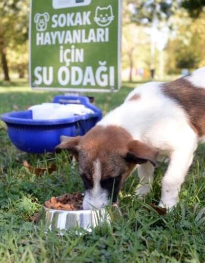 Osmangazi Belediyesi sokak hayvanlarını unutmadı