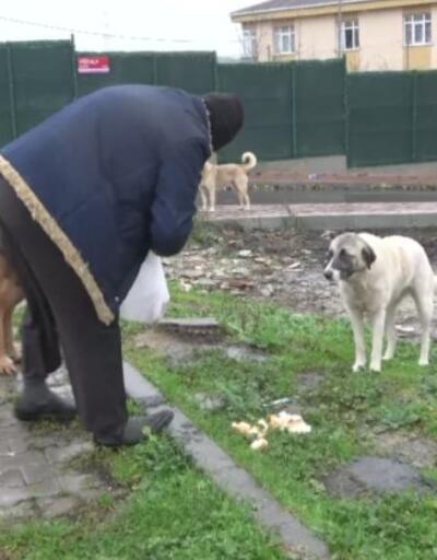 Hayatını sokak hayvanlarına adadı   Video