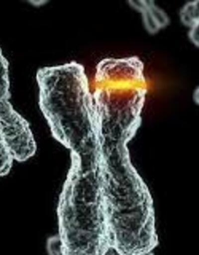 Virüsün mutasyona uğraması nedir? Mutasyon ne demek?
