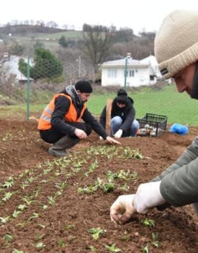 Çan Belediyesi, 10 bin salep fidesini toprakla buluşturdu