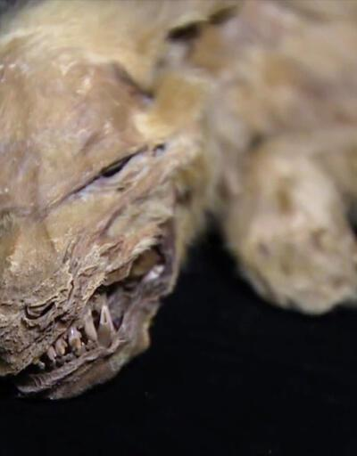 57 bin yıllık olduğu ortaya çıktı! | Video
