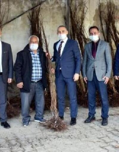 Turgutlu'da 15 üreticiye 4 bin 500 kayısı fidanı dağıtıldı