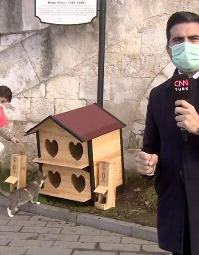 Kısıtlamada sokak hayvanları unutulmadı   Video
