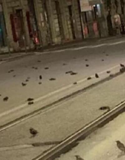 Roma'da yılbaşı kabusu! Yüzlerce kuş öldü