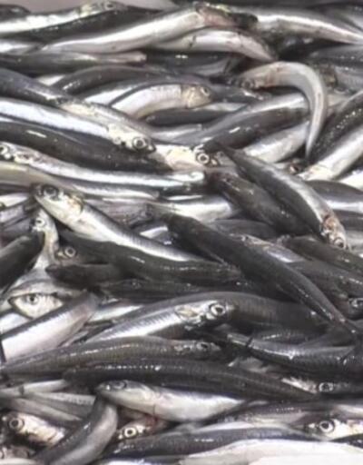 Boğaz'da ve Karadeniz'de hamsi avlamak yasaklandı | Video