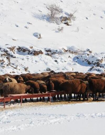 Bingöl'de kar yüzünden yaylada mahsur kaldılar