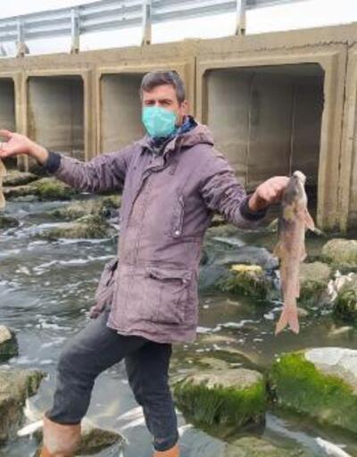 Tarsus'ta çayda binlerce balık telef oldu