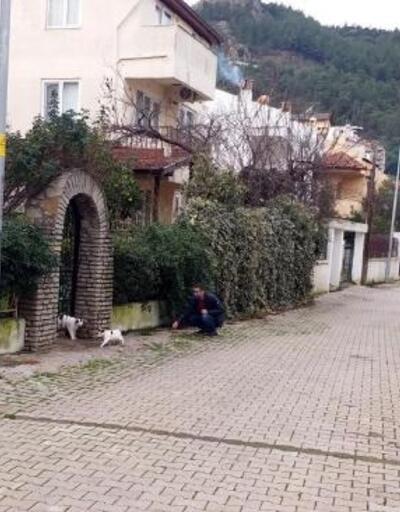 Marmaris'te kısıtlama kapsamında sokak hayvanları unutulmadı