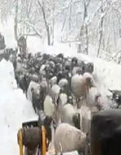 Karda mahsur kalan çobanlar ve bin dolayındaki küçükbaş, kurtarıldı