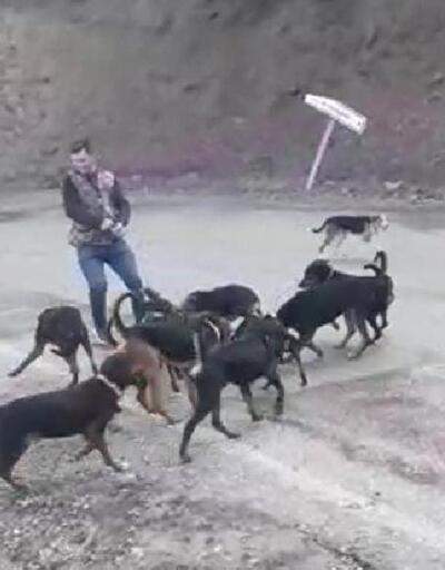 Yaraladıkları yavru domuzu köpeklere parçalattılar