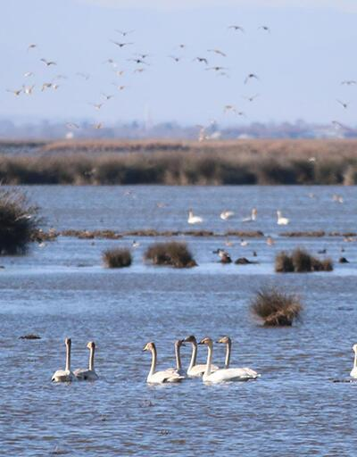 Tehlikede: Karadeniz'den tuzlu su sızdı