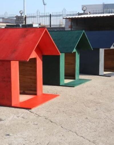 Gölbaşı'nda sokak hayvanları için atık malzemelerden kulübe