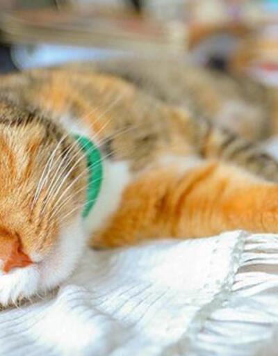 Güney Kore'den flaş karar! Evcil hayvanlar da karantinaya alınacak