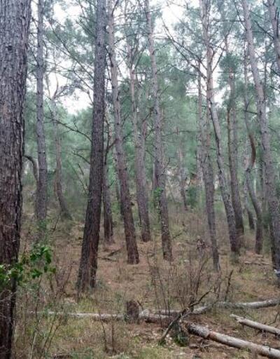 Kimliği belirsiz kişiler ağaçları köklerinden söktü