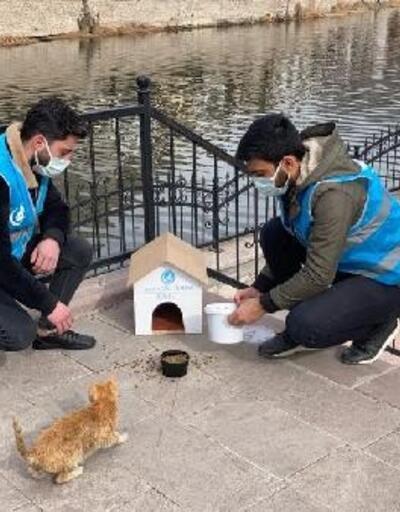 Amasya'da sokak hayvanları beslendi