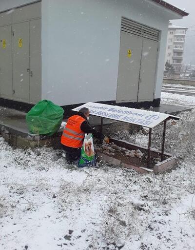 Akşehir Belediyesi, sokak hayvanlarını beslemeyi sürdürüyor